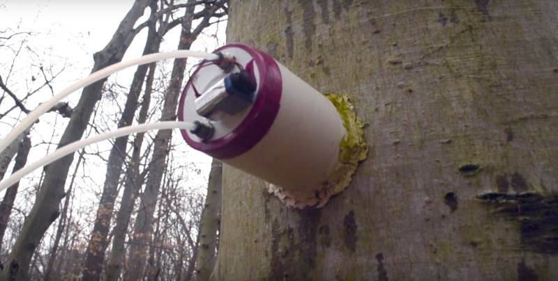 Methane emission on tree being studied using a sophisticated sensor
