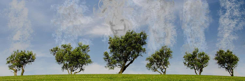 Tree Global Warming